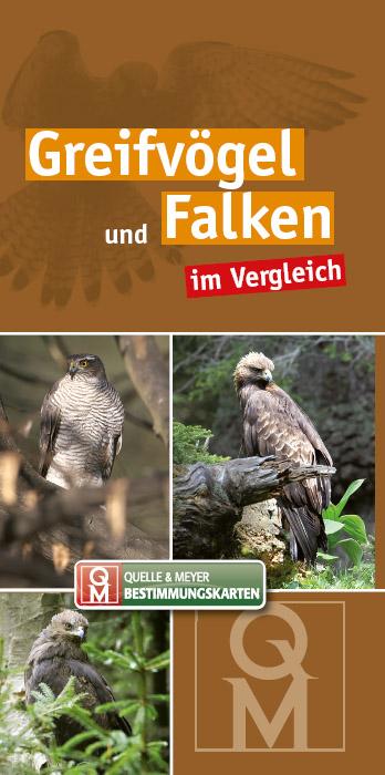 BK-Greifvögel-Falken.jpg