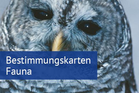 Bestimmungskarten Fauna