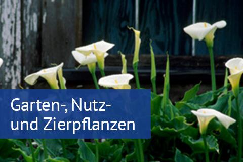 Garten-,Nutz- und Zierpflanzen