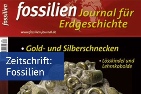 fossilien.jpg