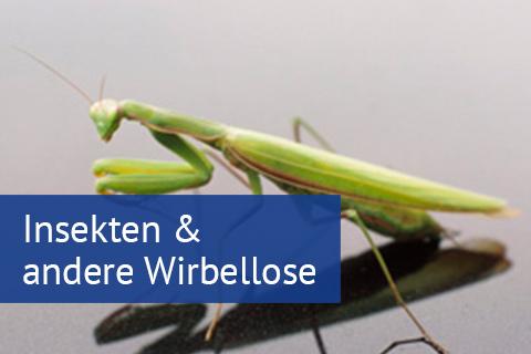 Insekten & andere Wirbellose