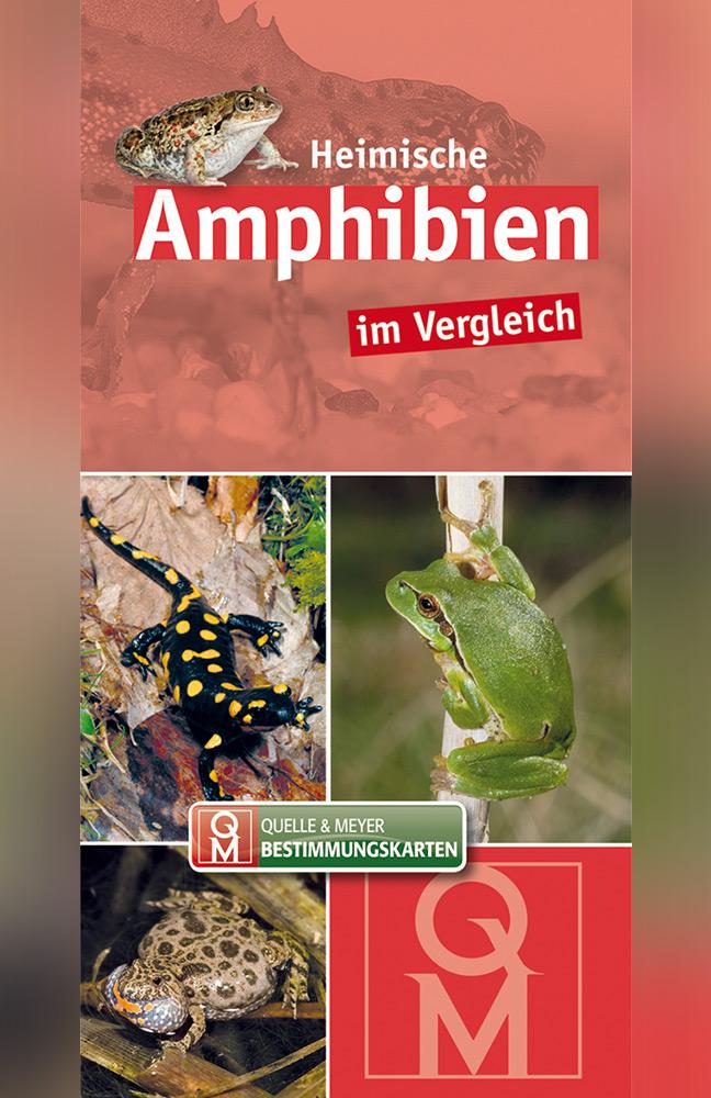 Bestimmungskarte-Amphibien.jpg