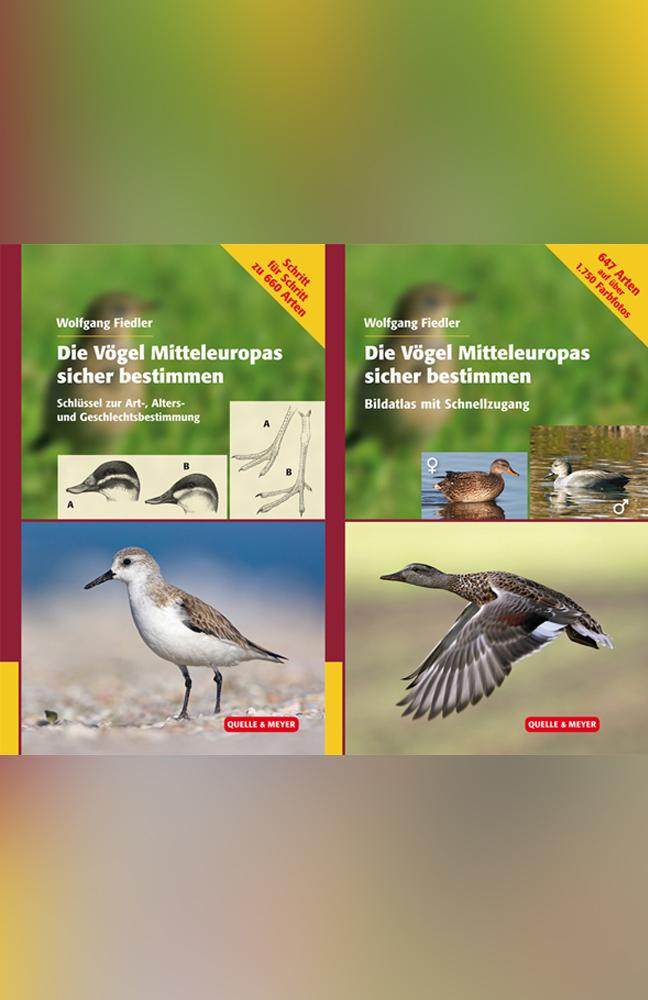 Fiedler-Vögel-ME-bestimmen.jpg