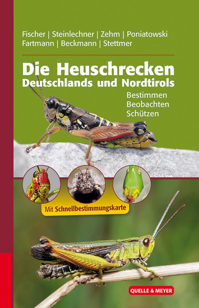 Fischer-Heuschrecken_1.A_5x7.jpg