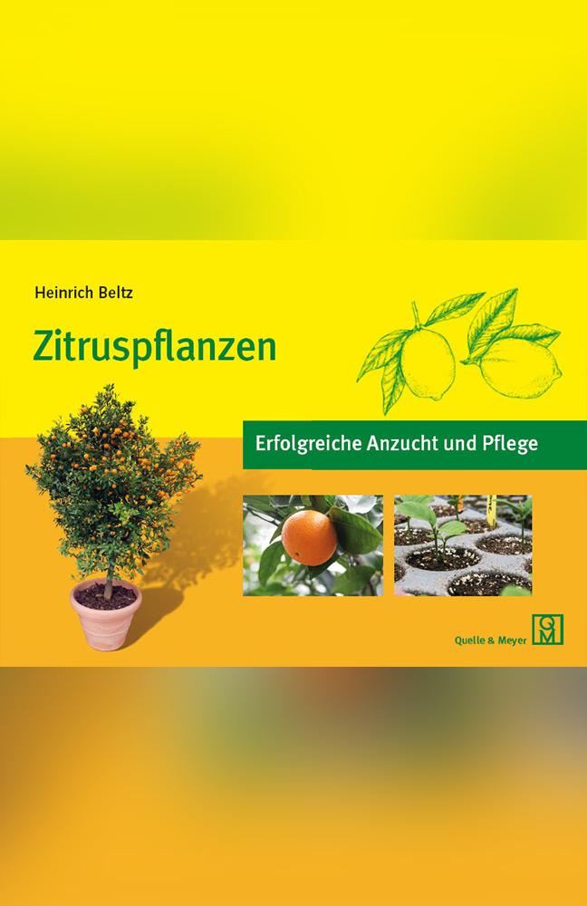 zitruspflanzen.jpg