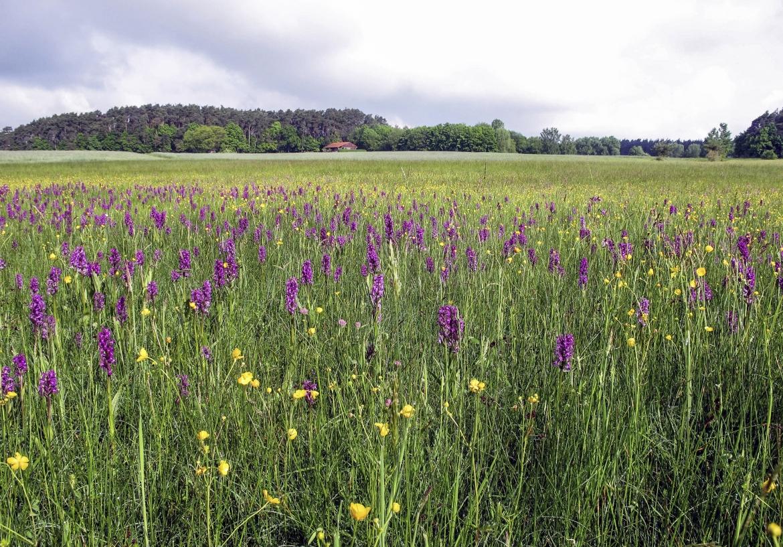 E17_Orchideenwiese_WolfgangvonBrackel.jpg