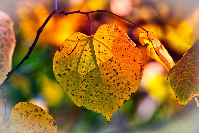 autumn-leaves-3813775_1920.jpg
