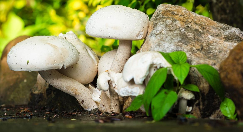mushroom-372064_1280.jpg