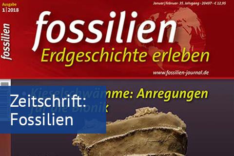 kategorie-fossil.jpg