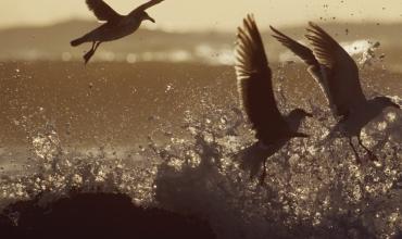 57. Jahrestagung des Vereins Sächsischer Ornithologen