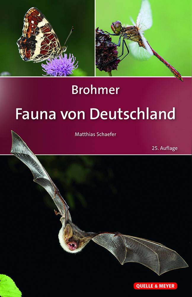 Brohmer_Fauna-Dtl._25A._5x7.jpg