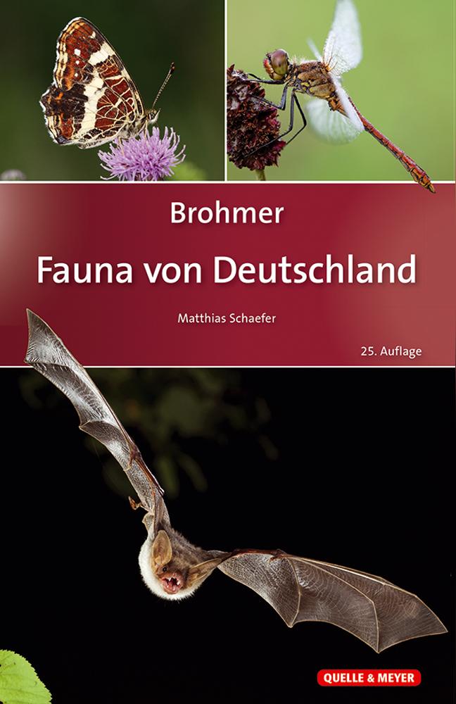 Brohmer_Fauna-Dtl._25A.jpg