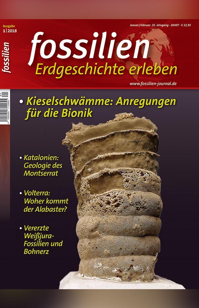 Fossilien_Neu.jpg
