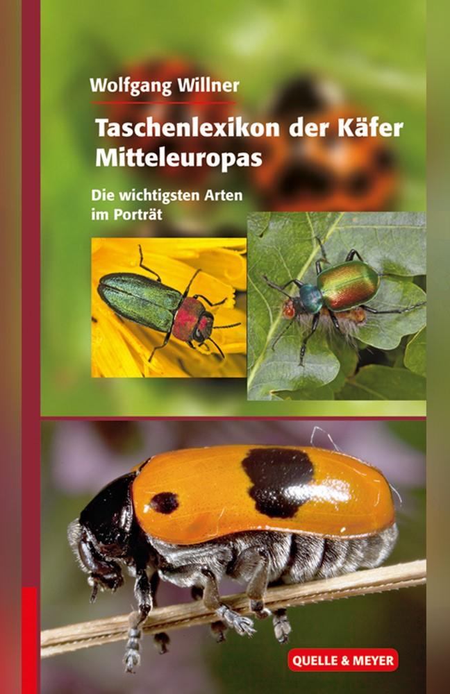 willner-käfer.jpg