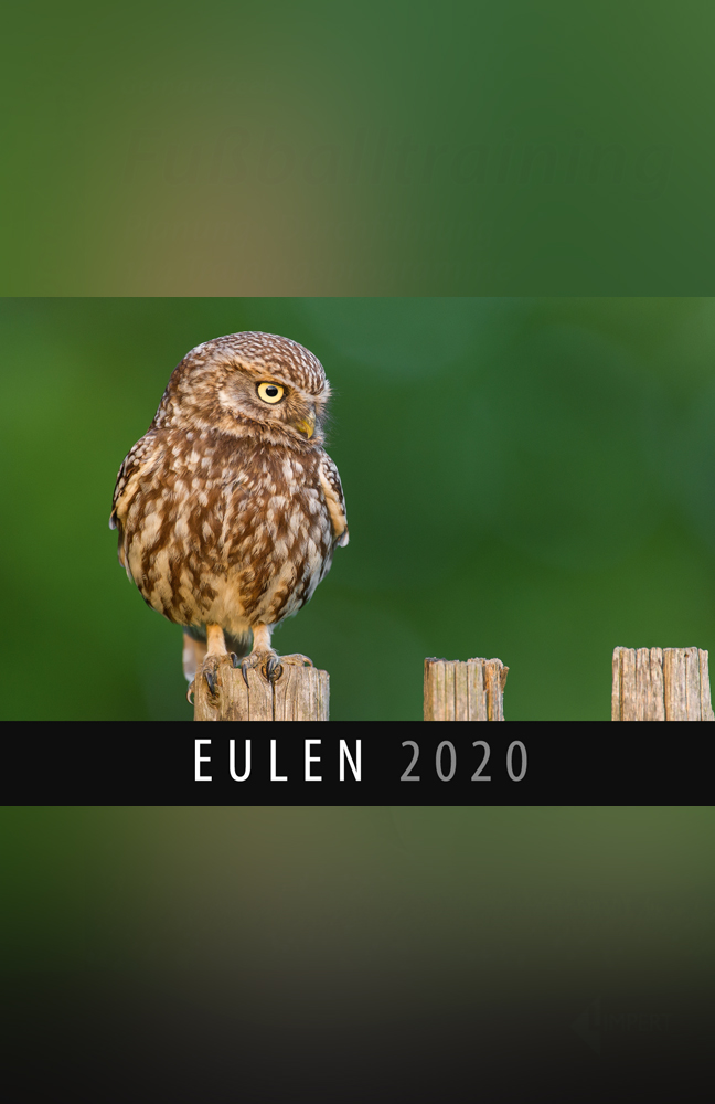 Eulen-Kalender.jpg