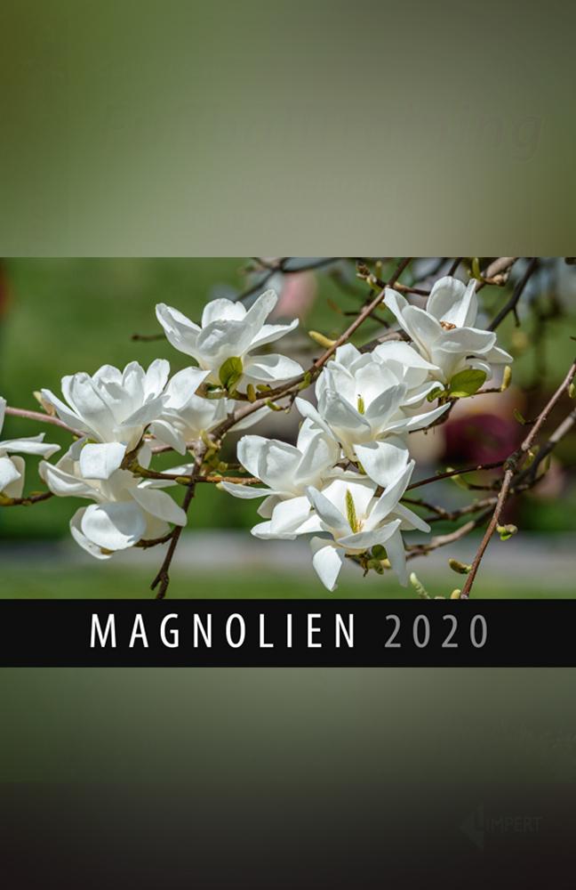 Magnolien-Kalender.jpg