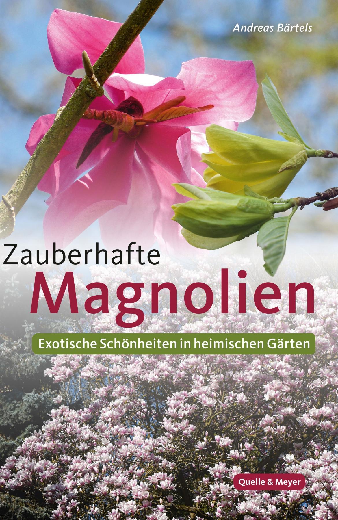 Bärtels_Magnolien.jpg