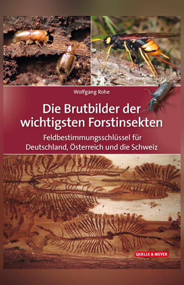 Rohe-Brutbilder-Forstinsekten.jpg