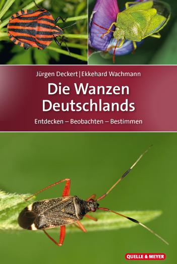 Deckert-Wanzen-1.jpg