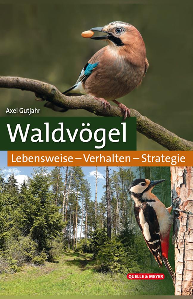 Gutjahr-Waldvögel.jpg
