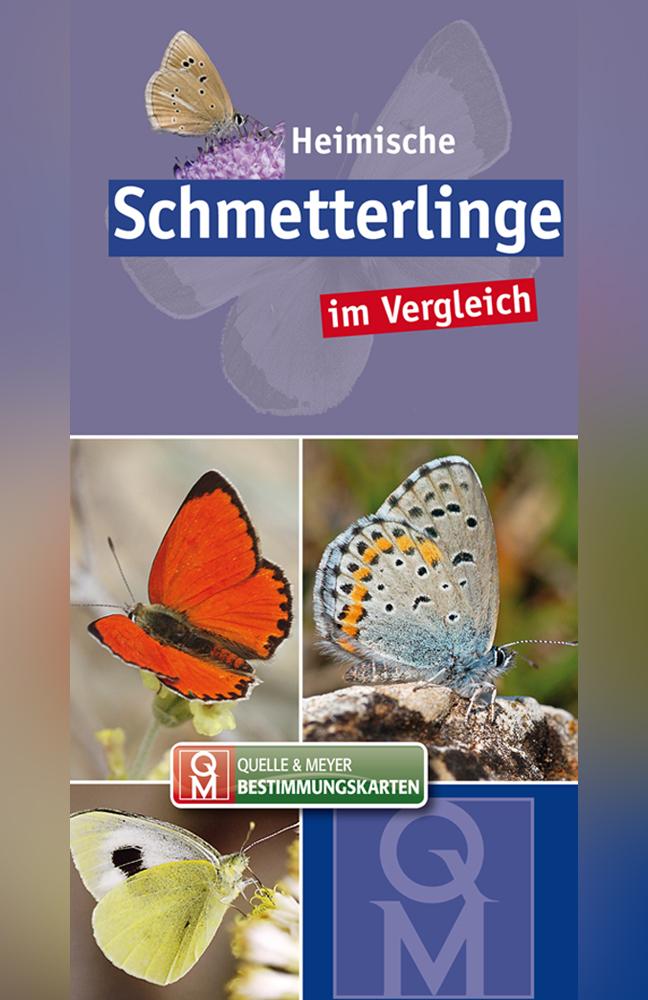 BK-Schmetterlinge.jpg