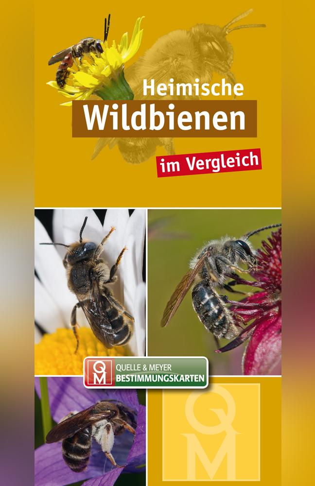 BK-Wildbienen.jpg