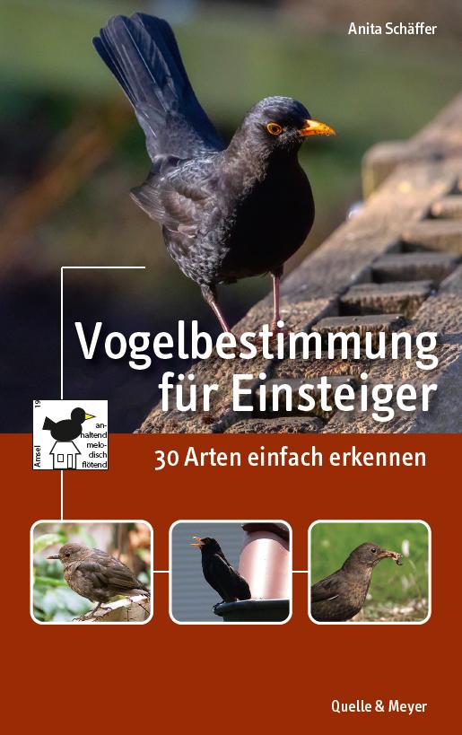 Schäffer-Einsteigerbuch-Cover.jpg