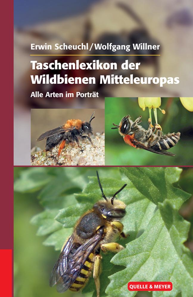 Scheuchl-Wildbienen.jpg