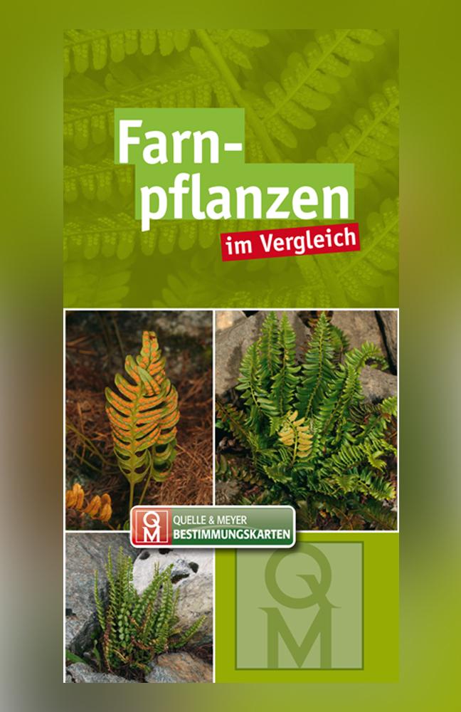 QM-Bestimmungskarte-Farnpflanzen.jpg