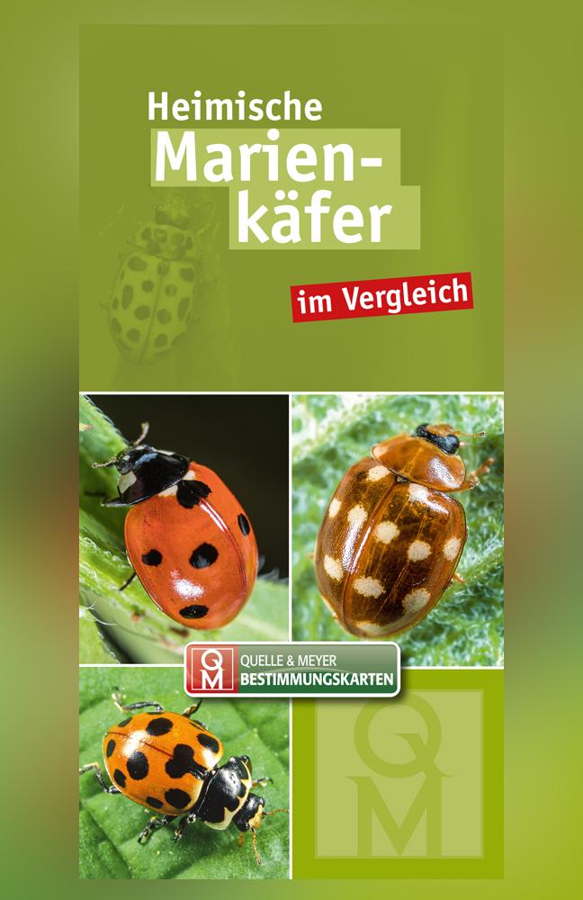 QM-Bestimmungskarte-Marienkäfer.jpg